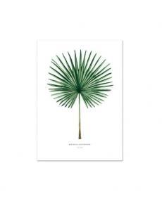 Leo la Douce Art Print Fan Palm