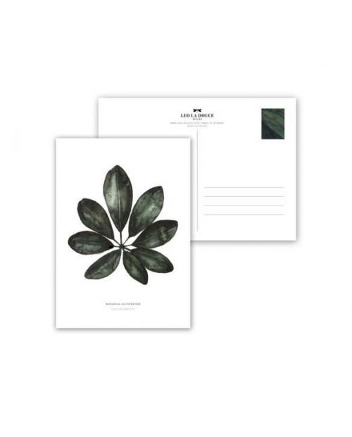 Leo la Douce Postkarte Schefflera Arboricola