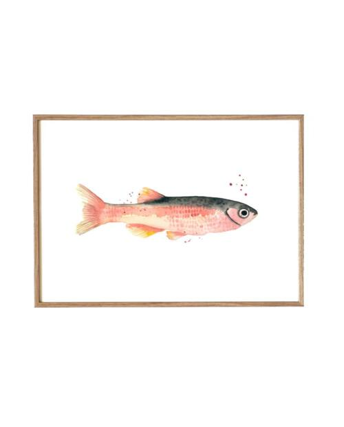 Leo La Douce KD 184 rose fish